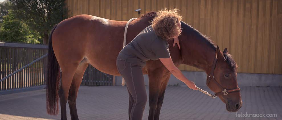 Damit die Muskeln in Form bleiben, muss das Pferd den Hals sowohl dehnen als auch anspannen können. Das üben wir am Boden und beim Reiten.