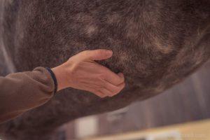 20150907Geli Pferd 1 Therapie 09