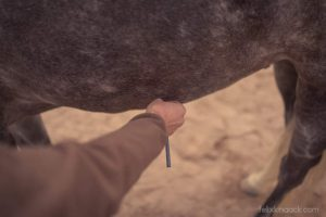 20150907Geli Pferd 1 Therapie 15