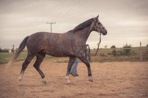 20150907Geli Pferd 1 Therapie 16