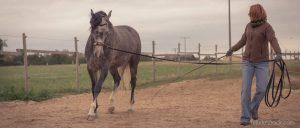 20150907Geli Pferd 1 Therapie 22-2
