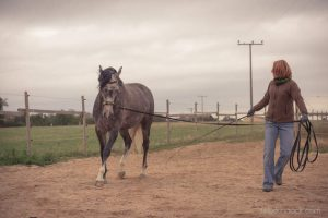 20150907Geli Pferd 1 Therapie 22