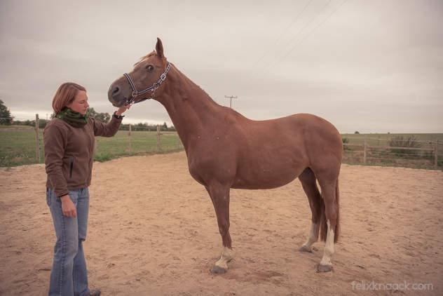 caprice pferd