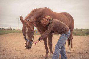 Angelika Wohlfarth beim Physio-Check: Kann das Pferd die Halsmuskeln an- und entspannen?