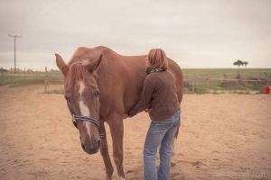 20150907Geli Pferd 2 Therapie 04