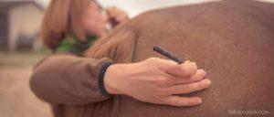 20150907Geli Pferd 2 Therapie 09-2