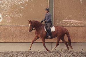 Leichttraben in der Reitbahn: Der Reiter sitzt geschmeidig, damit das Pferd Schwung entwickeln kann. Foto-Copyright: Wiemer