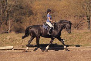 Hohlkreuz beim Leichttraben: Die Reiterin demonstriert einen typischen Sitz-Fehler, der sich durch Variieren der Bügellänge beheben lässt. Foto-Copyright: Wiemer