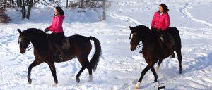 Wichtig ist es, dass der Reiter die Vorhand steuern kann, um diese bei schiefen Pferden auf die Hinterhand auszurichten. Foto: Markus Schendzielorz/SMARTreiten