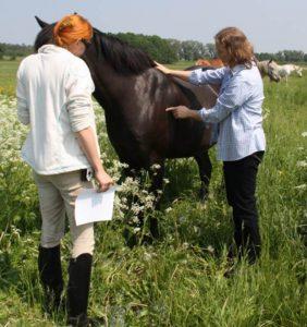 Tierärztin und Ernährungsberaterin Dr. Kathrin Irgang checkt den Body Condition Score BCS eines ihrer Patienten. Foto-Copyright: Irgang