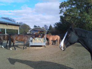 Stroh gegen Stress: Wenn Pferde freien Zugang zur Strohraufe haben, sind sie am entspanntesten. Foto: Pferdevilla Schmid