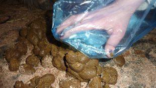 Um zu ermitteln, ob eine Wurmkur nötig ist, nimmt man Kotproben von möglichst frischen Pferdeapfel-Haufen. Foto: www.entwurmungpferd.de