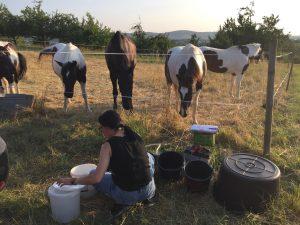 Silke mischt täglich zwei Mal für fünf Pferde das Mineralfutter ins Kraftfutter.