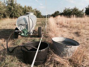 Mit diesem Wasserwagen transportiert Silke das Wasser zur Weide. Dort füllt sie es über Schläuche in Zink- oder Kunststoffwannen um, die sie jeden Tag reinigt. Foto: Felsinger
