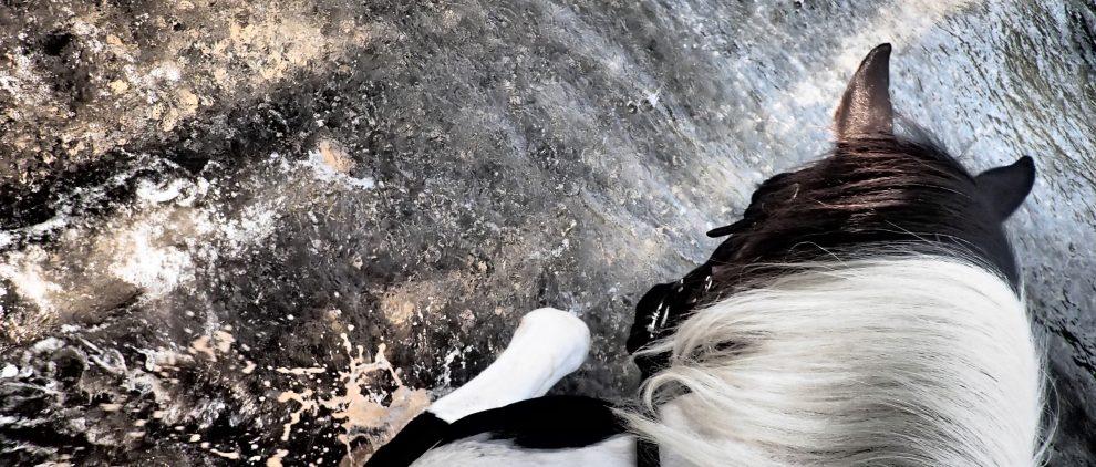 Pferde lieben es, erst im Wasser zu planschen und dann zu trinken. Hier beim Wanderritt auf dem Paint-Mix Phoebe, der meiner Freundin Silke gehört. Foto: Felsinger