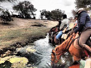 Auf unserem Wanderritt durch Botswana waren wir beeindruckt, wie geschickt, manierlich und entschlossen die Pferde (fast ausnahmslos Boerpaards, also Burenpferde) aus den Wasserlöchern tranken. Wasser ist dort eine Seltenheit während der Trockenzeit. Foto: Felsinger