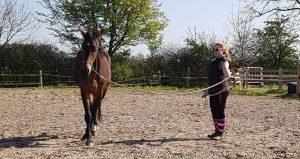 Bella figura am Boden: Ann-Kristin mit ihrem Wallach. Foto: privat