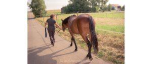 Auch beim Spazierengehen im Schritt soll das Pferd den Hals fallenlassen, damit sich die Oberlinie dehnen kann.