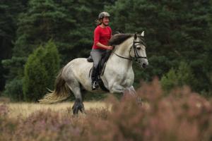 Schwungvoll für mehr Bauchmuskeln: Sowohl Reiterin Susanne Anger als auch Lusitano-Hengst Tenor profitieren vom frischen Gelände-Galopp.