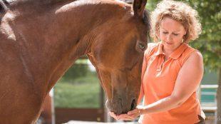 Freundschaft füttern: Wir lieben es einfach, wenn unsere Pferde uns aus der Hand fressen.