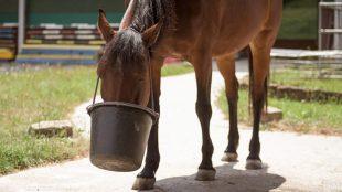 Den Eimer gibt's erst, wenn das Pferd ruhig darauf wartet und nicht bettelt oder hibbelt.