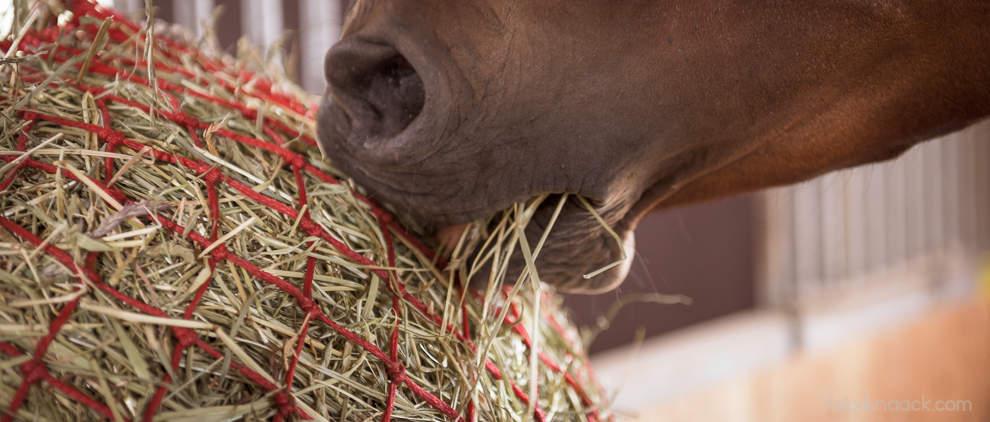 Ein Sparmodell für Maya: Heu ist Grundnahrungsmittel und wird per Heunetz pferdegerecht dosiert.