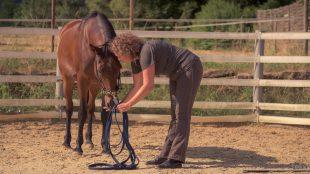 Christine Felsinger und Pferd Maya im Round Pen.