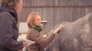 Physiotherapeutin Angelika Wohlfarth testet, wie das Pferd auf Reize an bestimmten Körperpartien reagiert. Kann es seine Muskeln an- und entspannen?