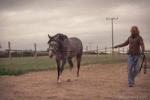 20150907Geli Pferd 1 Therapie 19
