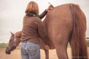 20150907Geli Pferd 2 Therapie 07