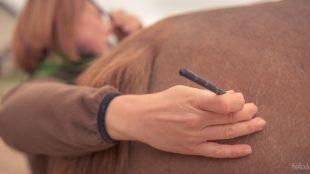 Kruppen-Test: An dieser Stelle möchte Angelika Wohlfarth herausfinden, ob das Pferd seine Hinterhand-Muskeln gut an- und entspannen kann.