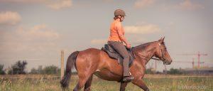 Im Gelände traben die meisten Reiter lieber leicht - wir auch!