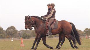 Schön synchron: Mit Abwechslung im Training allein oder zu zweit macht Traben Pferden und Reitern mehr Spaß. Foto-Copyright: Wiemer