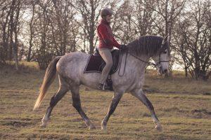 Schwung verbessert den Trab und formt Muskeln; besonders, wenn wir die Kopf-Hals-Position variieren: Dressurreiten im Gelände klappt oft besser, weil die Pferde motivierter vorwärts gehen. Foto-Copyright: Wiemer
