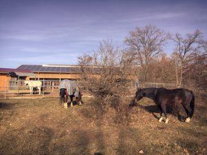 Magere Koppeln sind für Pferde, die wenig Leistung bringen müssen, ideal.