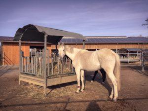 """Im Selektionsbereich der """"Pferdevilla"""" fressen die schwerfuttrigen Pferde Heu ad libitum. Im Hintergrund steht die Strohraufe, an die alle Pferde ran können."""