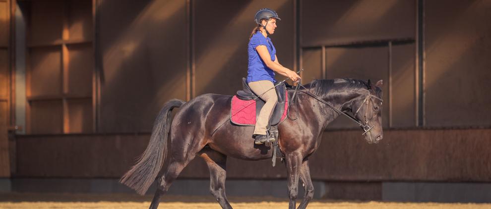 Das Pferd schreitet fleißig, die Reiterin begleitet die Vorwärtsbewegung mit federnder Hand.