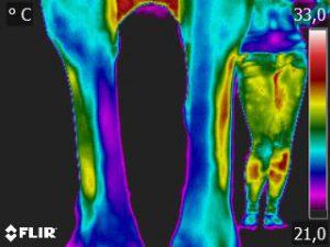 Thermografie-Aufnahme einer 9-jährigen Warmblutstute nach zwei Stunden Boxen-Ruhe. Die Bein-Temperatur liegt bei etwa 24,9 Grad Celsius.