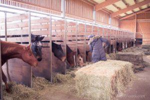 Im Heuständer können die Pferde in Ruhe und im Trockenen fressen. Die Heuballen werden in die Stallgasse gefahren, von dort wird das Futter mit der Gabel vorgelegt.