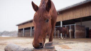 An der Schwimmertränke: Pferde müssen immer freien Zugang zum Wasser haben, im Winter wie im Sommer.
