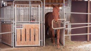 Im Kraftfutterständer bekommen die Pferde nicht nur Müsli, Pellets oder Getreide, sondern auch Mineralfutter.