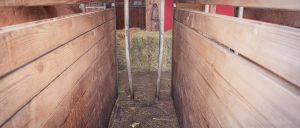 Im Heuständer liegen Gummimatten. Die Pferde fressen zwischen den Gitterstäben durch.