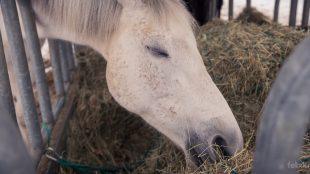 Hmmm, Heu schmeckt und ist die Grundnahrung. Doch Heu allein reicht Pferden meist nicht, weil es zu wenig lebenswichtige Nähr- und Mineralstoffe enthält.
