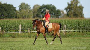 Übergänge gelingen geschmeidig, wenn wir das Pferd nicht durch fehlerhafte Handeinwirkung ausbremsen.