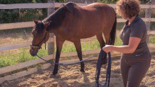 Lahmt das Pferd? Wenn wir Reiter uns nicht sicher sind, holen wir den Tierarzt und erwarten Rat und Reparatur.