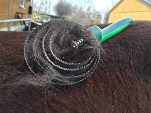 Der Tierarzt empfiehlt: Vor allem im Fellwechsel sollte das Pferdefell täglich gestriegelt werden. Foto: FREUNDPFERD
