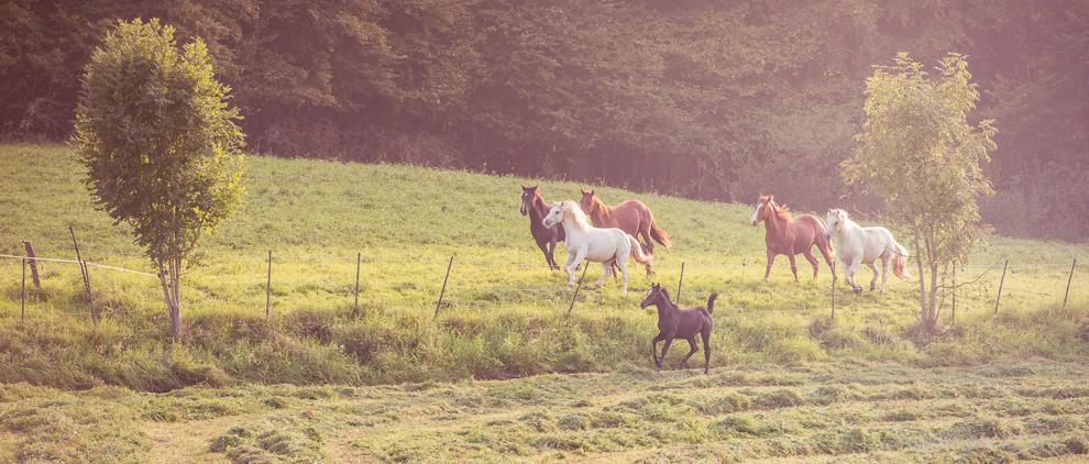 Die gesunde Pferdeweide bietet Auslauf, Sozialkontakt und Gras, das genügend Nährstoffe enthält.