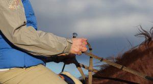 Auf der Geraden: Hand und Arm bilden mit dem Zügel eine Linie zum Pferdemaul. Foto: Wiemer