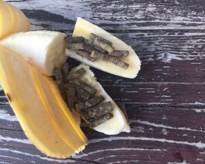 Mineralfutter oder auch Medikamente fürs Pferd lassen sich gut in Bananen verstecken.