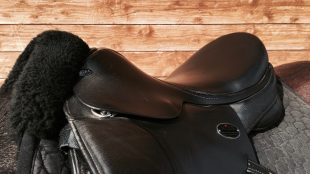 Der Sattel ist die Nahtstelle zwischen Pferd und Reiter. Dabei gibt es diverse Problemzonen. Foto: Felsinger